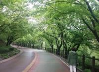 휴일 서울에서 즐겁게 보내는 방법 / 류시호 작가